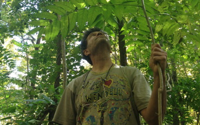 Herbalist Training: How to Become an Herbalist