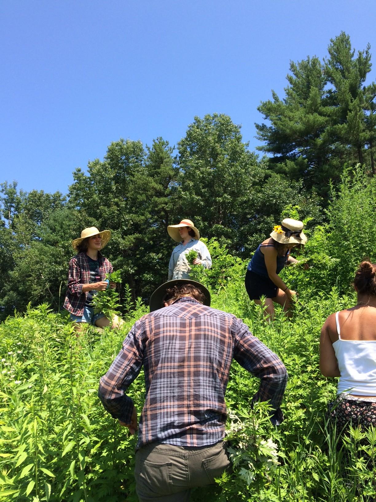 Wildcrafting: Wildcraft herbs responsibly
