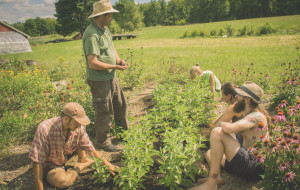 becoming an herbalist in a medicine garden