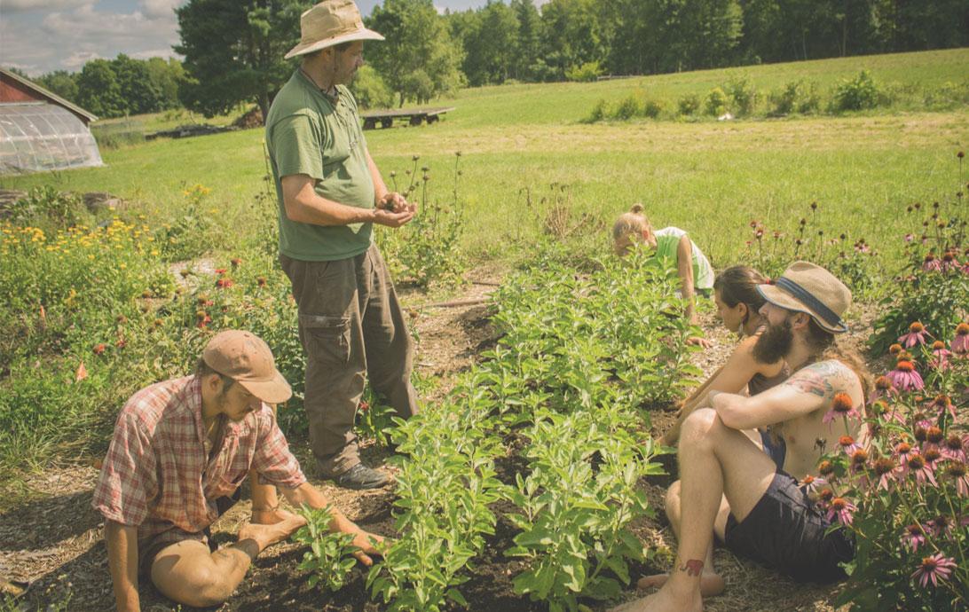 Herbalism school with teaching gardens.