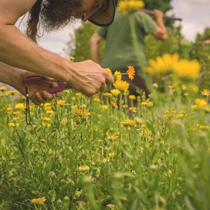 clearpath-school-of-herbal-medicine-highlight2