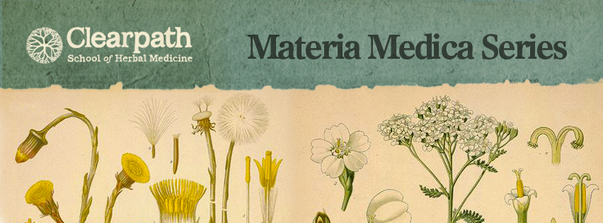 How to become an herbalist with Materia Medica.