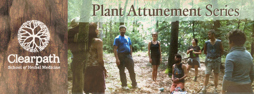 How to become an herbalist with Plant Attunement.