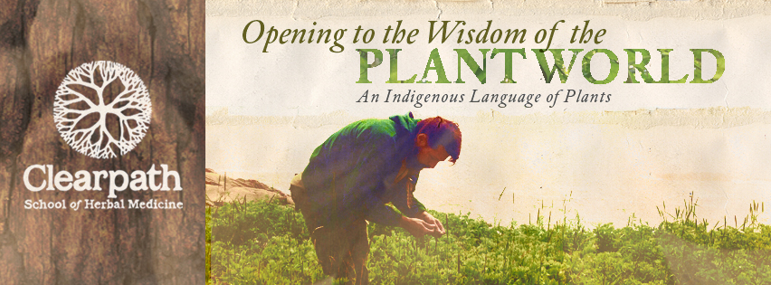 How to become an herbalist with Opening to the Wisdom of the Plant World.