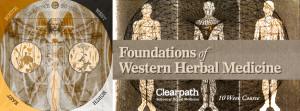 Foundations of Western Herbal Medicine @ Wendell | Massachusetts | United States