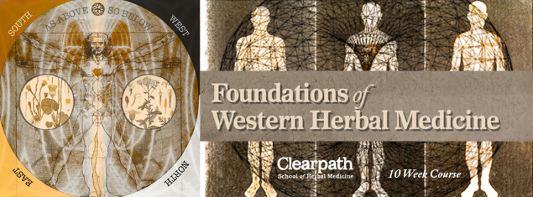 How to become an herbalist with Foundations of Western Herbal Medicine.