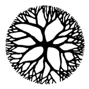 Western herbal medicine courses online