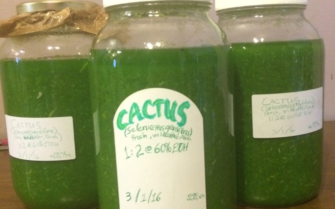 Making Cactus Tincture: Processing Fresh Plant