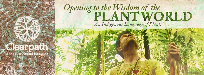 Opening to the Wisdom of the Plant World: An Indigenous Language of Plants