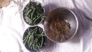 becoming an herbalist