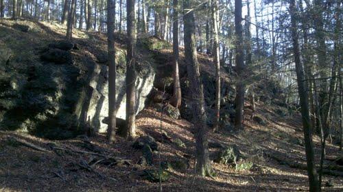 Plant Medicine and Nature Walk at Mt. Toby: Herb Lore and Sensory Awareness Skills