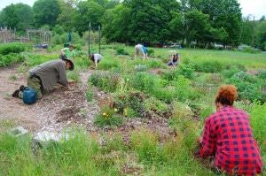 herbal medicine gardens