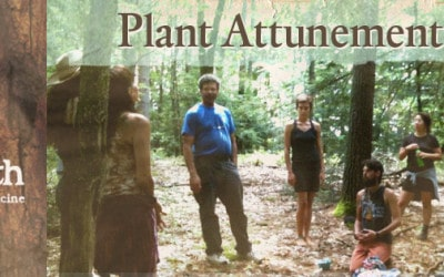 Plant Attunement: How-to Instructions
