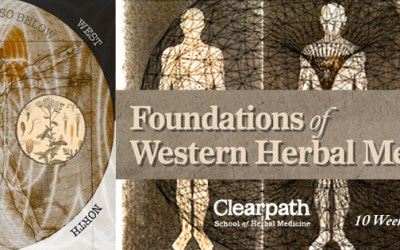 Discover Herbalism Classes Online with Breadth and Depth