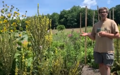 Mullein Uses: Flower, Leaf, and Root Medicines to Know